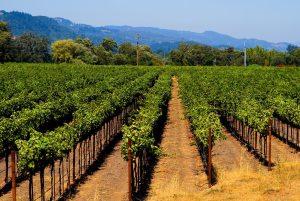 vineyard management technologies