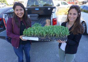 Seed company donates transplants