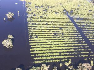 hurricane crop losses