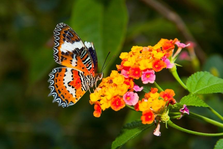 tips butterfly garden