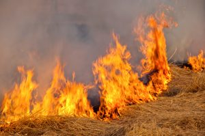 Prescribed Burn Association