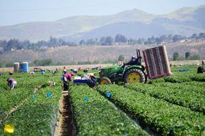 Agricultural Worker Safety