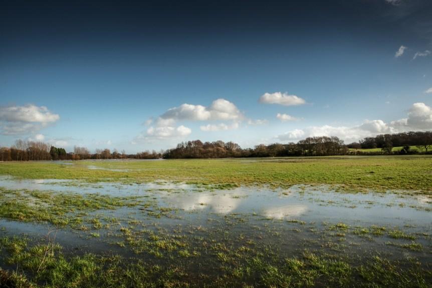 field runoff