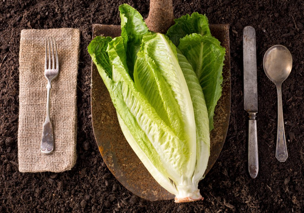 Massive romaine lettuce recall linked to California