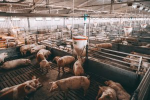 Animal Confinement - EATS Act