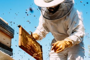 BeeWhere program