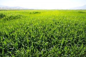Cover Crop Program