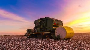 california cotton growers