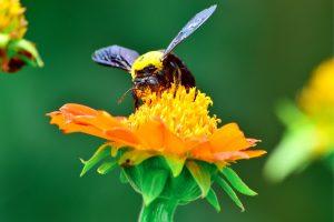New Pollinator Species
