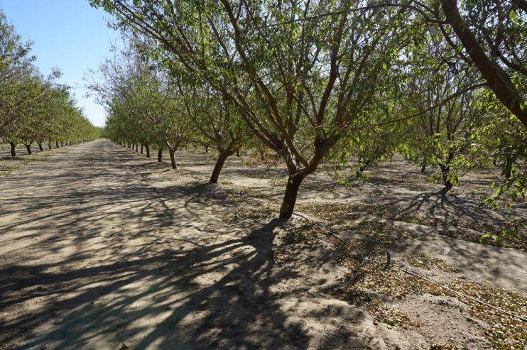 Yara Incubator Farm Trees