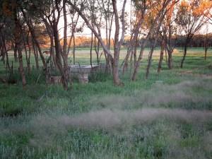 Grassland CRP