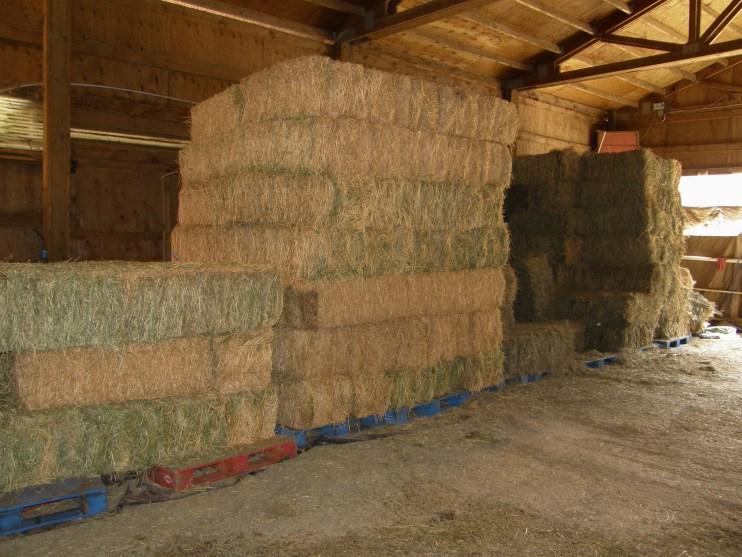 livestock hay feed