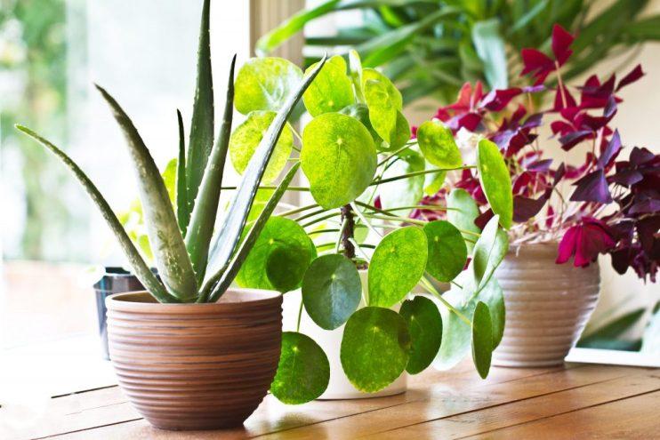 indooor plants
