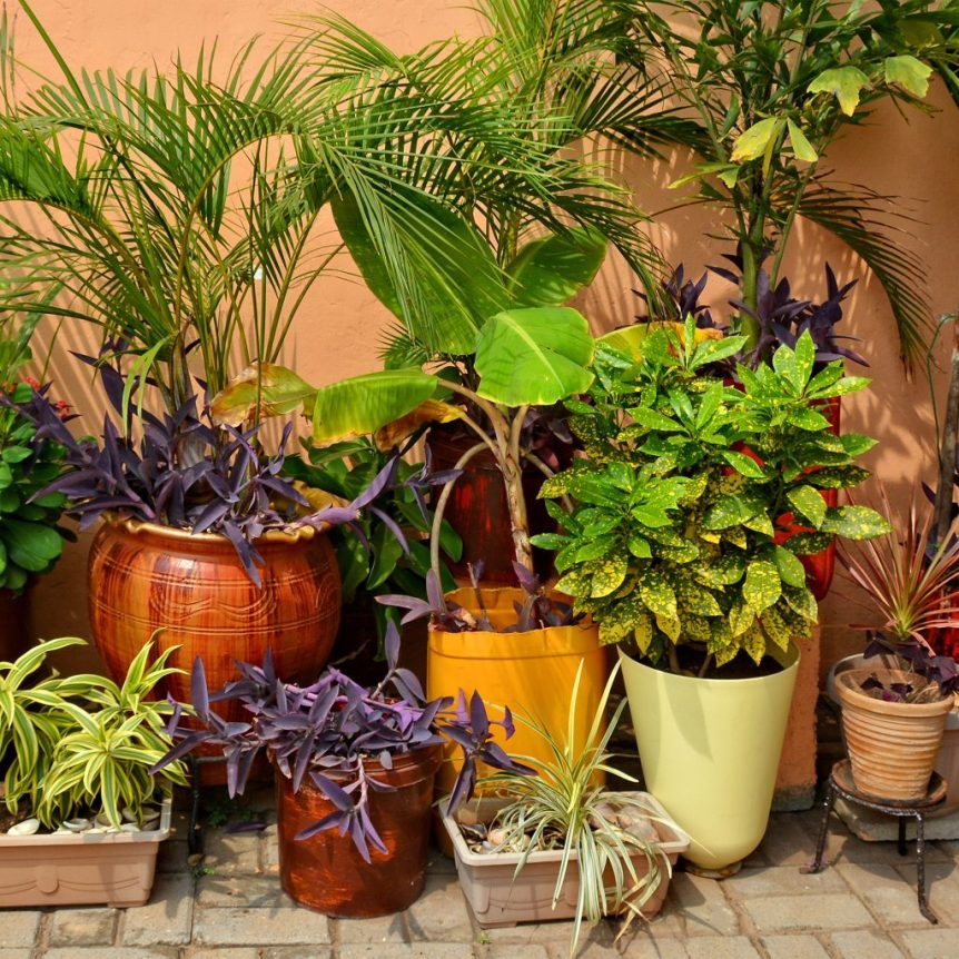 patio plants