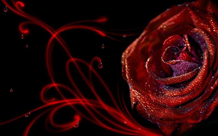 rose-flower-macro-drops-patterns-739032