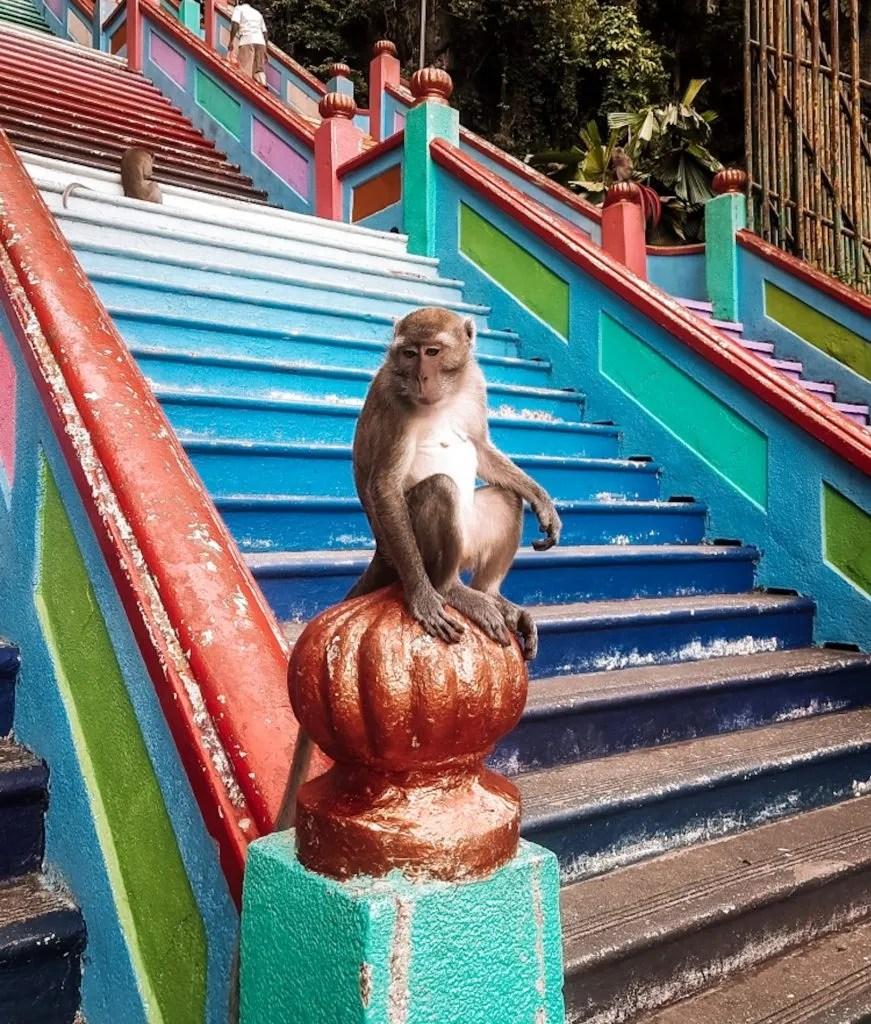 Monkeys in Batu Caves in Kuala Lumpur, Malaysia