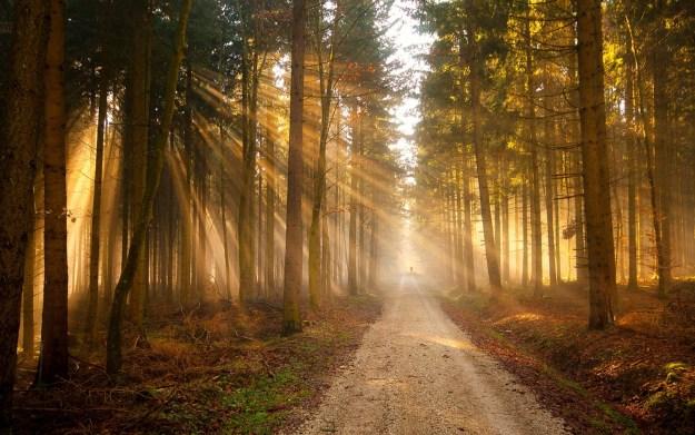 путь воина Света Агни Йога Живая Этика