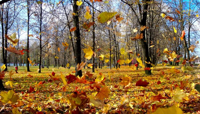 Leaves and Wind