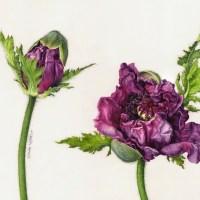 Botanical Art Drawings by Eunike Nugroho