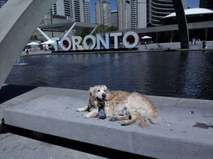 Visiting The Toronto Sign With Dad :)