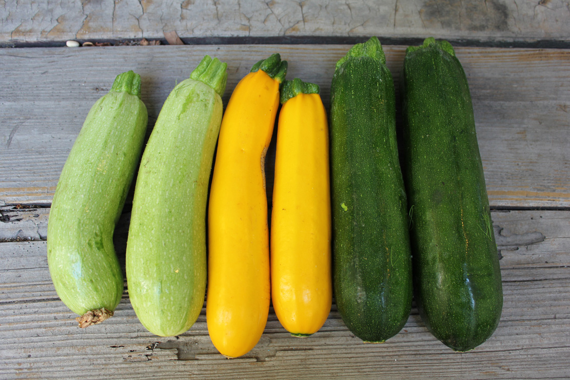 How to Store Zucchini