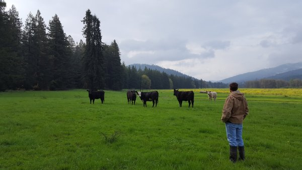 How to Buy Sustainable Beef