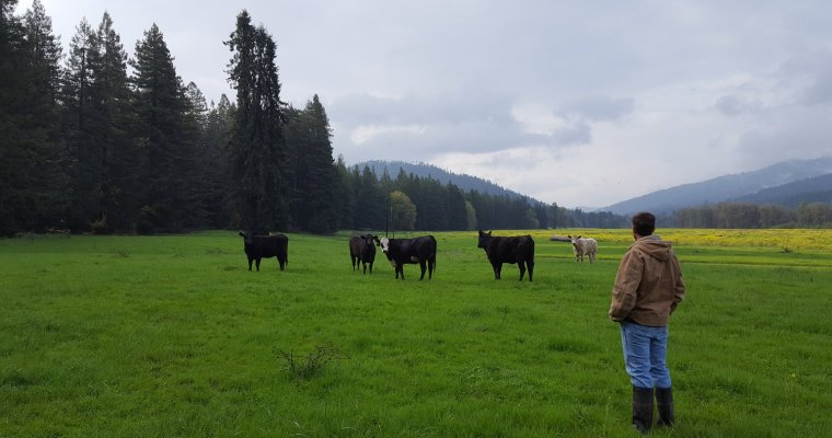 A Guide to Buying Grass-fed Beef