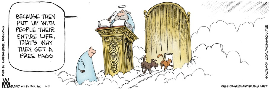 All Dogs and Cats go to Heaven