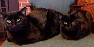 Cats Ilsa and Yvonne