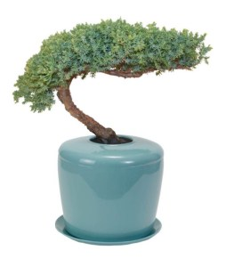 Bonsai Urn