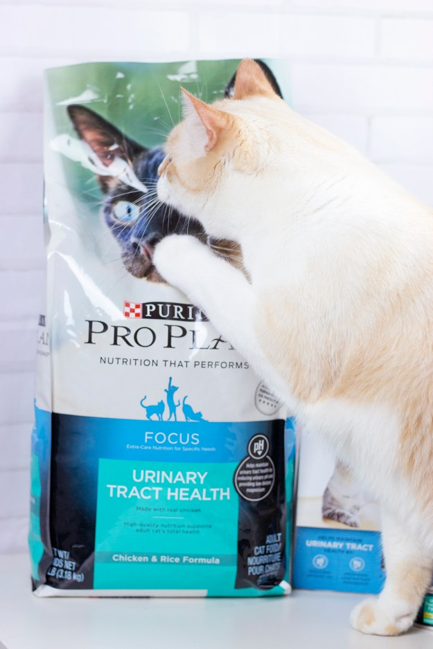 Putting a Focus on Pet Health with Purina Pro Plan | A Good Hue