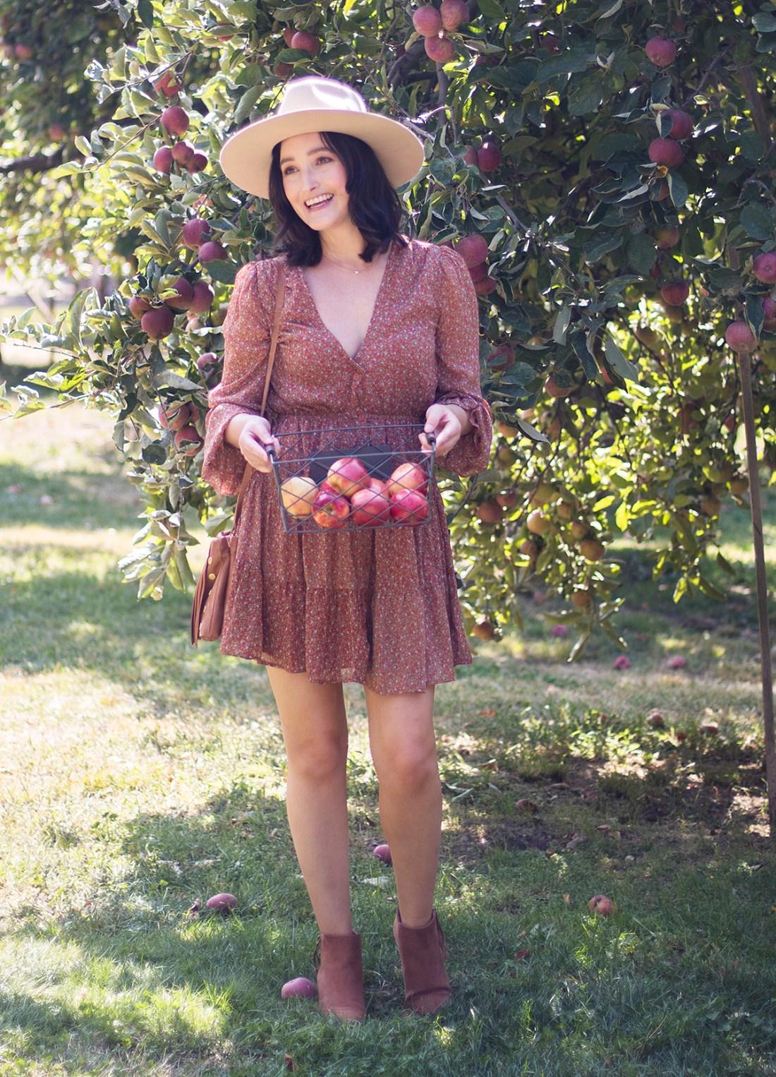Apple Picking at Willowbrook Apple Farm in Oak Glen   A Good Hue