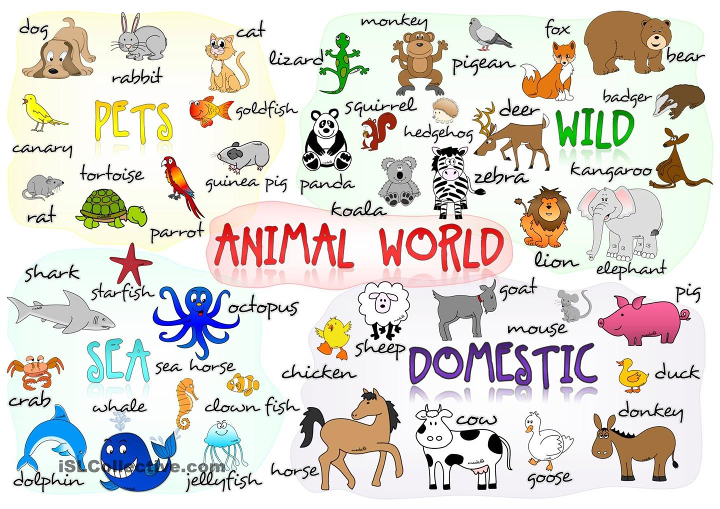 Can You Find The Animal That