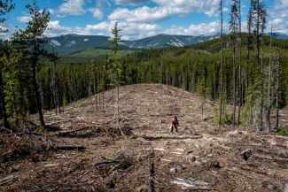 LUC FORSYTH, Reforesting the Boreal, photograph