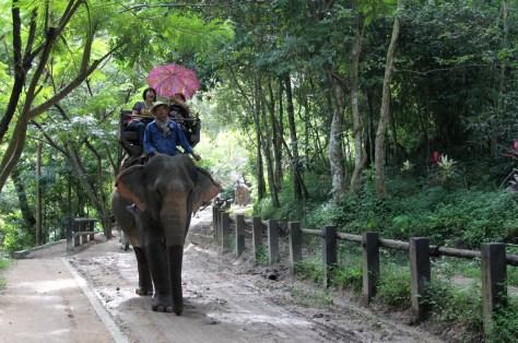Elephant Riding - Chiang Mai Thailand