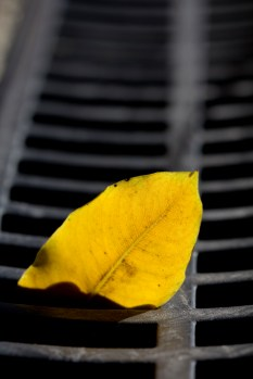 Leaf in the Drain