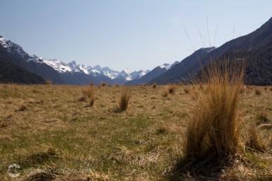 Fiordland National Park NZ