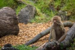 zoo-feb17-04