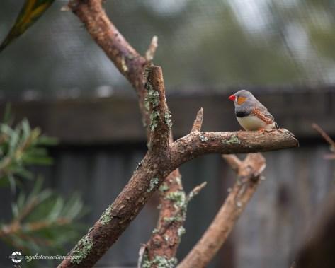 zoo-feb17-06