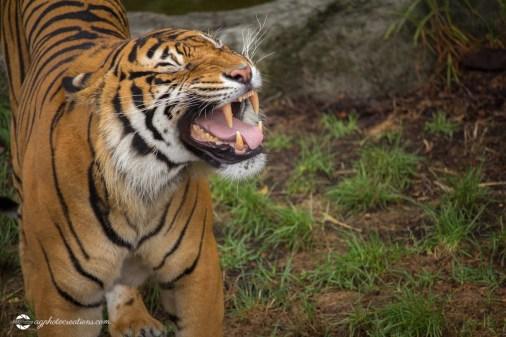 zoo-feb17-11