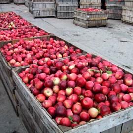 Farm Profile: Champlain Orchards