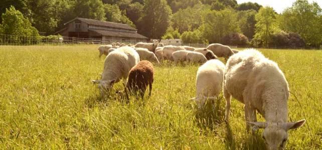 Farm Profile: Loud Pond Farm