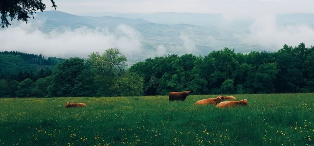 Connect with Agrarian Trust: Upcoming Events in Fall 2019