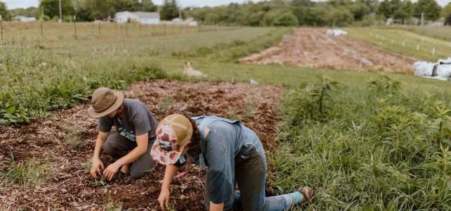 farmers weeding
