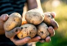 Почему в супермаркетах нет отечественной картошки
