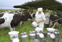 В. Гончаров: заниматься производством молока скоро станет выгодно