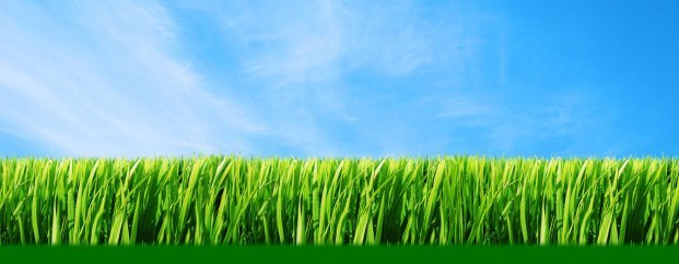 Grass_wallpapers_97.jpg