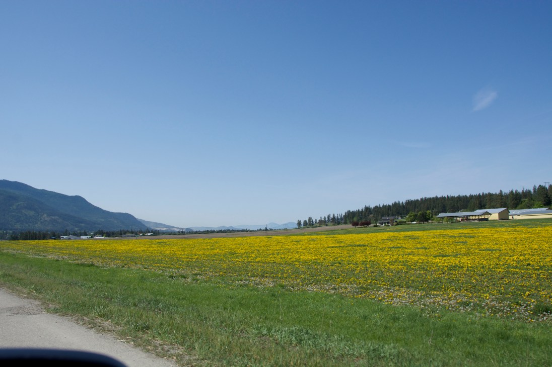 Driving to Vernon