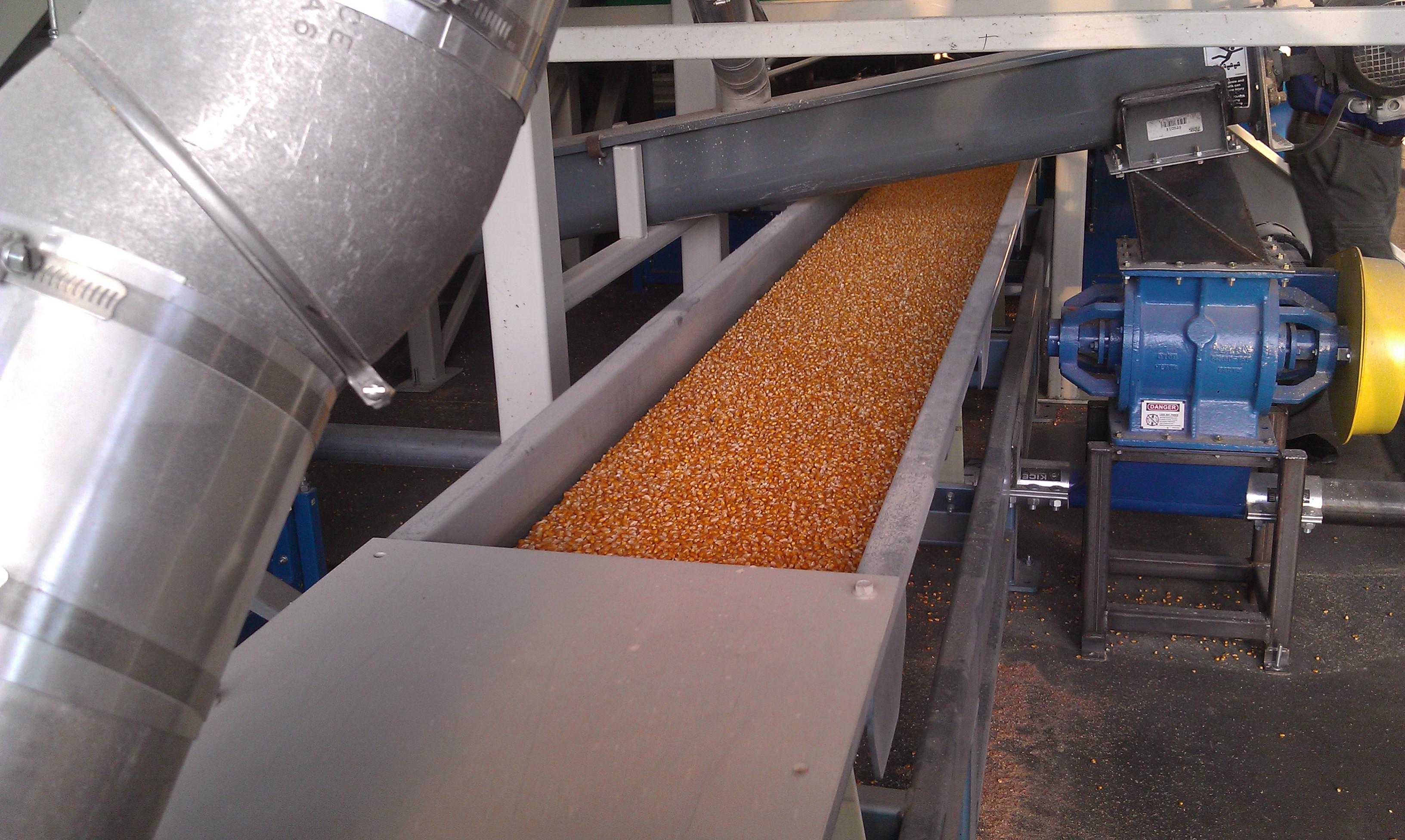 Seed on Conveyor
