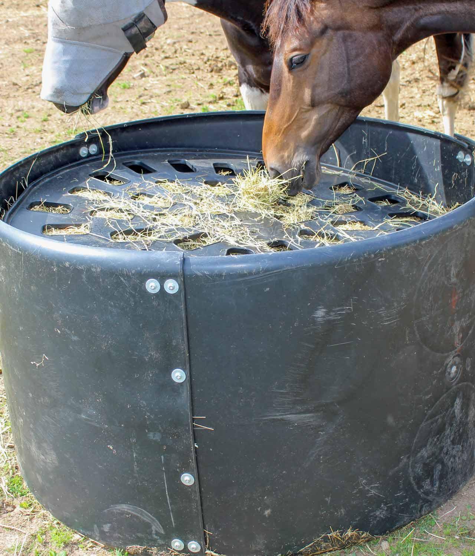 675_Horses
